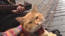 Вы слыхали как поют Коты Этот даже круче чем Киркоров!