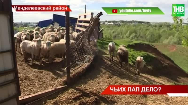 За ночь задушили полстада овец в селе Бизяки Менделеевского района
