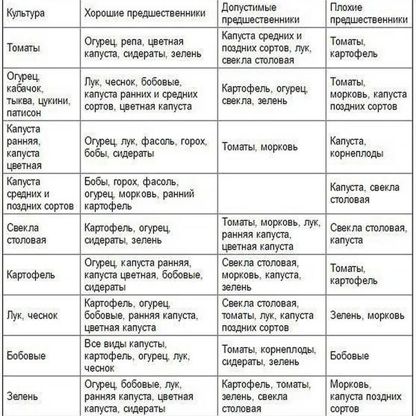 Таблица чередования посевов овощей в огороде