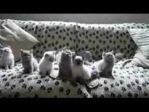 Котики машут головой под музыку