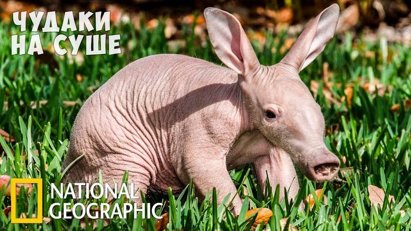Самые странные животные на суше National Geographic