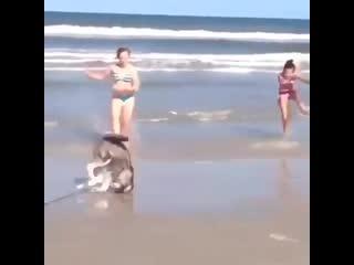 Der hund hat es drauf