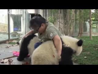 Работница зоопарка и панды 🐼 vk.com/luckycraft – подпишись!