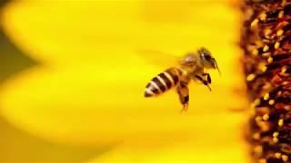 Знали ли вы, что сегодня отмечается Международный День Пчелы?