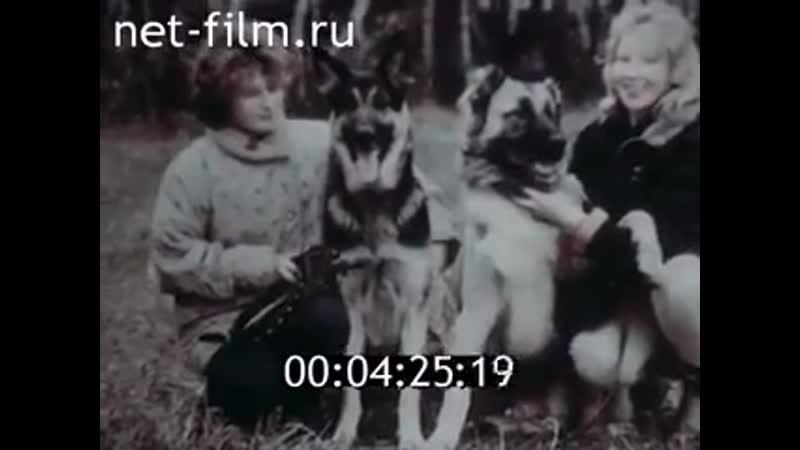 Докум.фильм Собаки, они готовы сослужить нам любую службу, а человеческое тщеславие и жестокость порой не знает границ ((