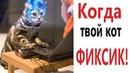 Лютые приколы. КОГДА КОТ ДУМАЕТ, ЧТО ОН ФИКСИК СМЕШНЫЕ КОТЫ! Угар до слёз!! – Domi Show