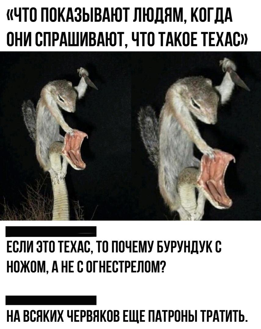 https://pp.userapi.com/c855224/v855224859/8a901/RkdsFqRpoc4.jpg