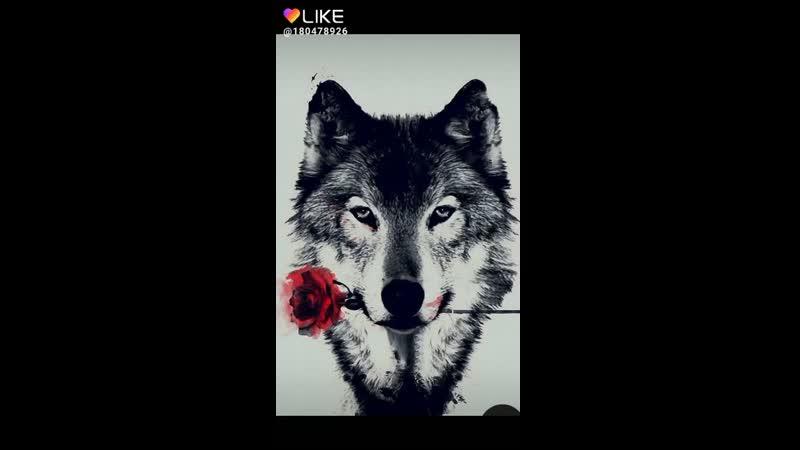Like_6672585081411089940.mp4