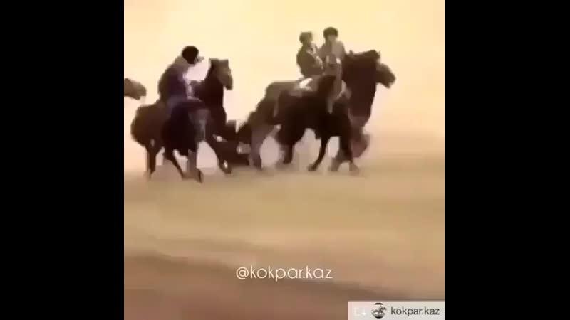Көкпар