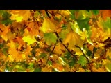 Скоро Осень Господа.До слез душевная песня! Павел Соколов