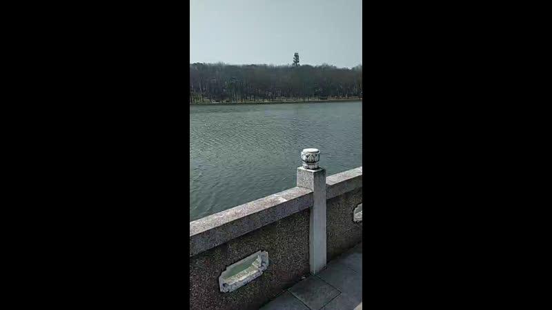 Китайский бонсай на озере