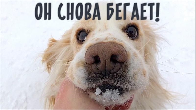 Счастливая история бездомной собаки инвалида Челлендж выполнен