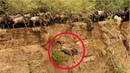 Hơn 1000 con linh dương nhảy từ trên đồi xuống chỉ để làm việc này