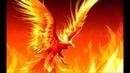 ШОК.Птицы поджигатели.Жар птица реально существует,и,там,где она появляется,сгорает все