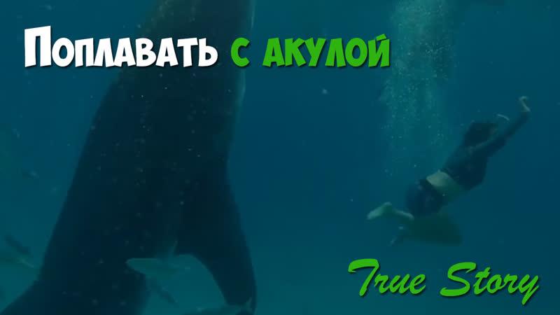Как поплавать с китовой акулой