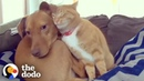 Hidden Camera Catches Cat Comforting Anxious Dog While Family's Away The Dodo Odd Couples
