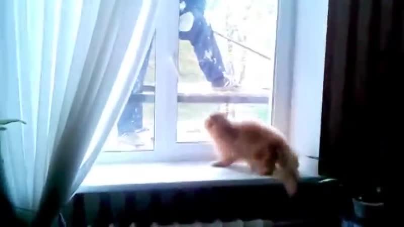 Кот Защищает Свой Дом От Штукатура))