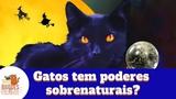 Gatos tem poderes paranormais Do the cats have supernatural powers