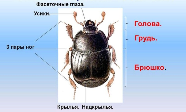 Кто такая улитка  насекомое или нет