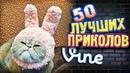 Самые Лучшие Приколы Vine! ВЫПУСК 157 Лучшие Вайны