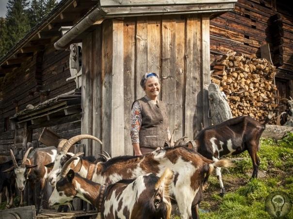 МЕСТНЫЕ ЖИТЕЛИ: В ГОРАХ МОЕ СЕРДЦЕ Кому-то везет жить в раю. Трудно воздержаться от зависти, глядя на зеленую альпийскую картинку с коровками и козочками на будто причесанных склонах...