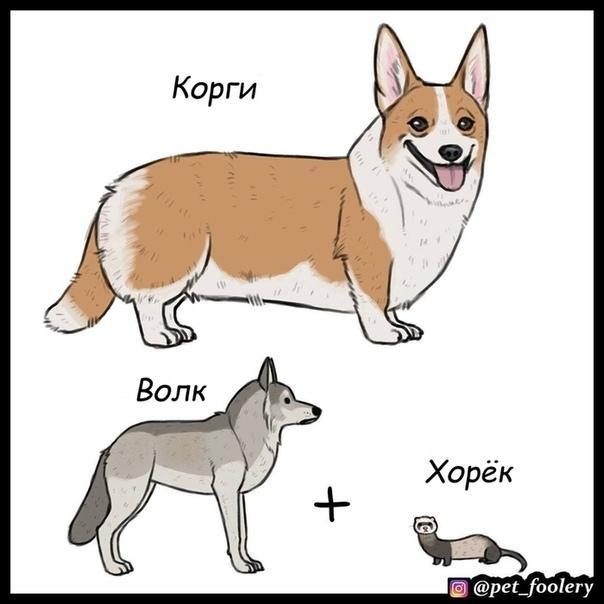 Волк и собаки Иллюстратор: Pet_foolery