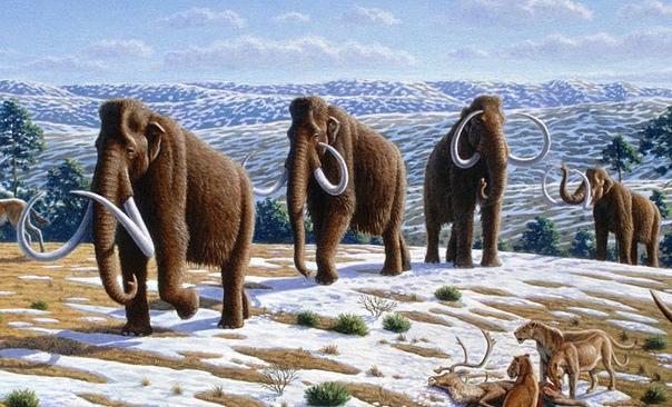 ПОСЛЕДНИЕ МАМОНТЫ НА ЗЕМЛЕ: ГДЕ ОНИ ЖИЛИ Ученые из РАН и университетов Хельсинки и Тюбингена воссоздали сценарий, который мог привести к вымиранию шерстистых мамонтов. Во времена последнего