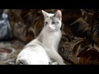 Котик охранник.