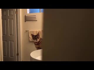 Что будет, если заавтотюнить кота