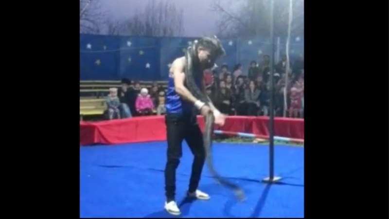 Удав задушил артиста цирка python strangled circus artist