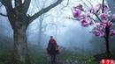 Riding a Horse to Find Magnolia Liliflora Blossoms for You 遛马寻花,摘下开得正盛的辛夷给喜欢的你们|Liziqi Channel
