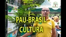 PAU-BRASIL, IMPORTÂNCIA DO RESGATE HISTÓRICO NO PLANTIO GLOBAL