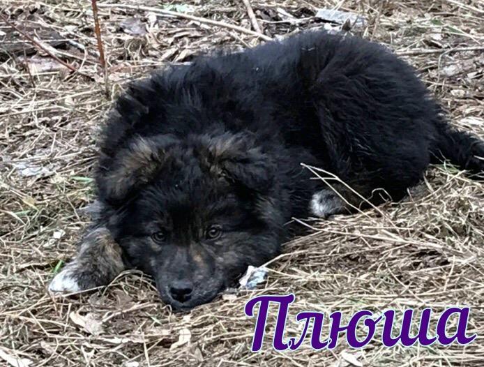 В г Брянске в Фокинском районе живет 5 озорных , очень добрых щеняток .
