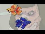 Бойцовые рыбки Metalocalypse
