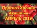 Прогноз Хроник Акаши на АПРЕЛЬ 2019