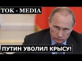 Путин уволил посла России Бабича Назначение нового сенатора Мезенского в Белоруссии