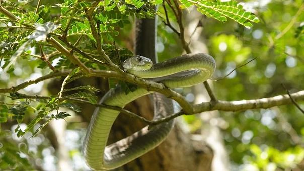 Народные приметы о змеях