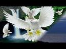 Приготовление к позднему дождю Святого Духа гл. 19 Другие стороны жизни нуждающиеся в реформе