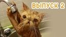 😹Я РЖАЛ КОТЫ Январь 2019 выпуск 2😹 - Смешные коты и котики, приколы с котов до слез