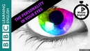 How your eyes predict your personality - 6 Minute English