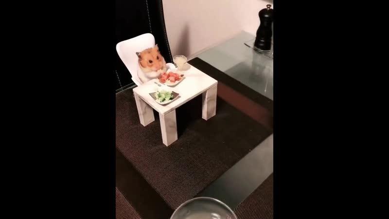 это я ужинаю со своим другом