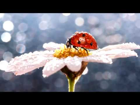 Солнечное утро. Музыка Сергея Чекалина. Sunny morning. Music Sergei Chekalin.