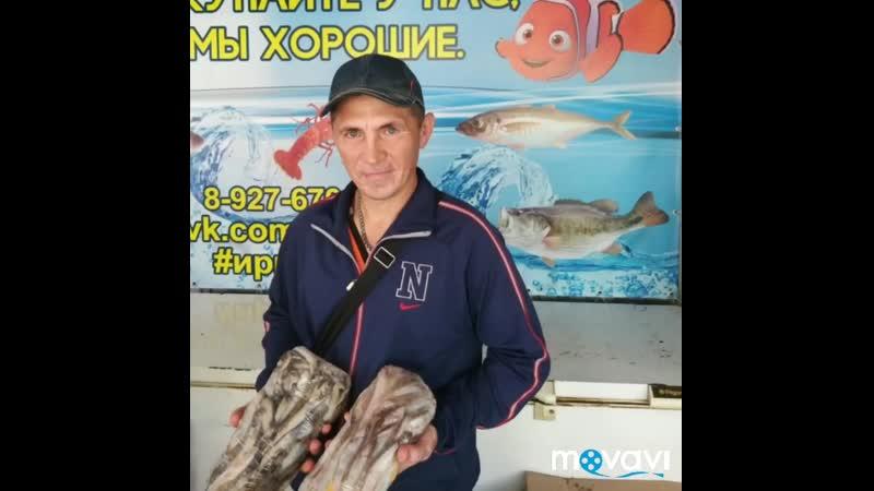 Поздравляем победителя розыгрыша❗👉😁🐠  📍Эльмир Гайнутдинов vk.com/id110347395 мойва 3 кг.❗👉😍🐟  ЕСТЬ ДОСТАВКА❗👉🚗 ⠀ ТОЛЬК