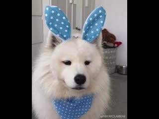 Симпатичный зайка