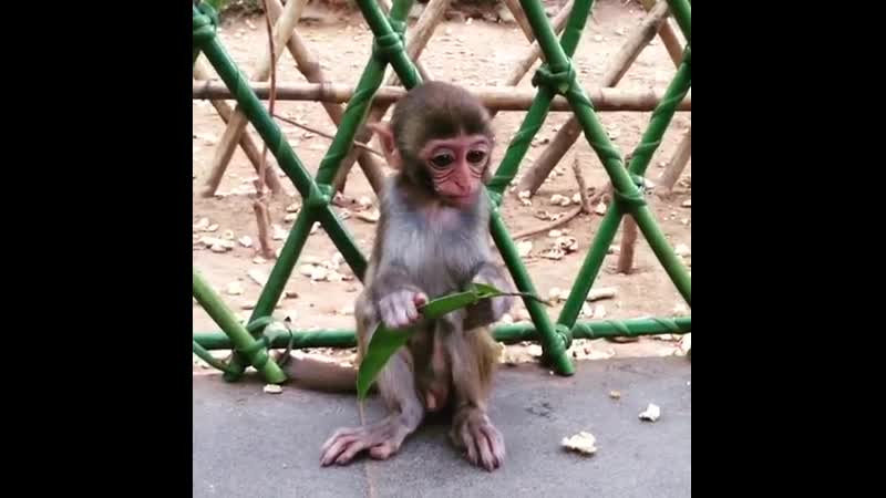 Остров обезьян (Хайнань)