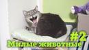Милые, обаятельные, смешные котики и собачки! Приколы с животными 2