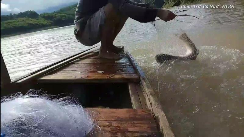 Thả lưới bắt cá lúc nước lên trúng đậm cá khủng