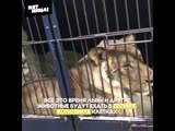 В тульском цирке жестоко обращаются с животными. Инсайдеры