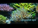 Не большой Коралловый риф из лпс и спс .mp4