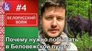 Беловежская пуща: яркие пейзажи и дикие звери - 4 Белорусский вояж